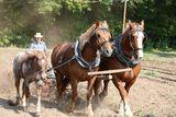 Pferdegespann mit Lenker, R. Klamt