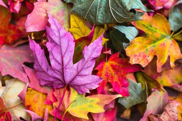 bunte Herbstblätter, Foto: StockSnap auf Pixabay