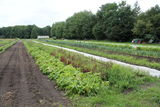 Felder mit regenerativer Landwirtschaft, Foto: FÖL e.V.