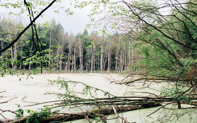 Grüner See im Wald mit Baumpanorama - Fototour, Foto: Laura Kießling , Lizenz: Beflügelt Von