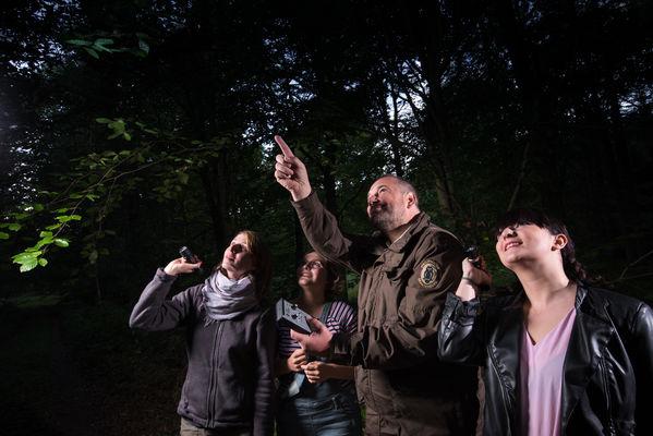 Noch bevor es dunkel wird, erscheinen die ersten Fledermäuse (Foto: S.Hennigs)