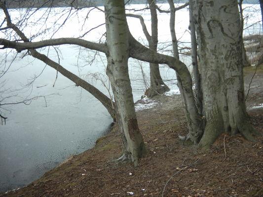 Urige Bäume säumen den See