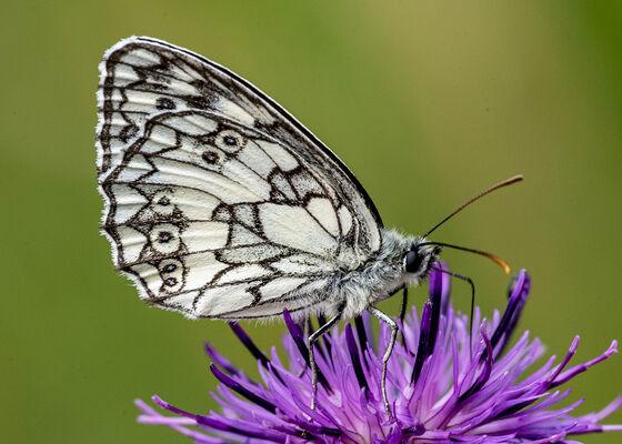 Blumenwiese, Foto: Naturwacht Unteres Odertal