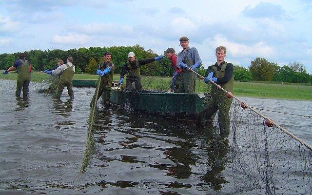 Zugnetzfischen, Foto: Günter Fischer