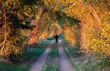 Herbstwanderung, Foto: Peter Becker, Lizenz: Peter Becker