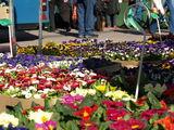 Cottbuser Wochenmarkt (Foto: Stadt Cottbus)