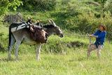 Mein Liebhaber, der Esel & Ich, Foto: Verleih: Wildbunch, Lizenz: Verleih: Wildbunch