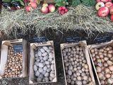 Kartoffeln, Zwiebeln Regionalladen, Foto: Anet Hoppe