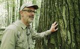 Das geheime Leben der Bäume, Foto: © Verleih: Nautilusfilm, Lizenz: © Verleih: Nautilusfilm