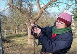 Obstbaumschnitt, Foto: NaturparkZentrum Westhavelland