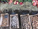 Kartoffeln, Zwiebeln Regionalladen , Foto: Anet Hoppe